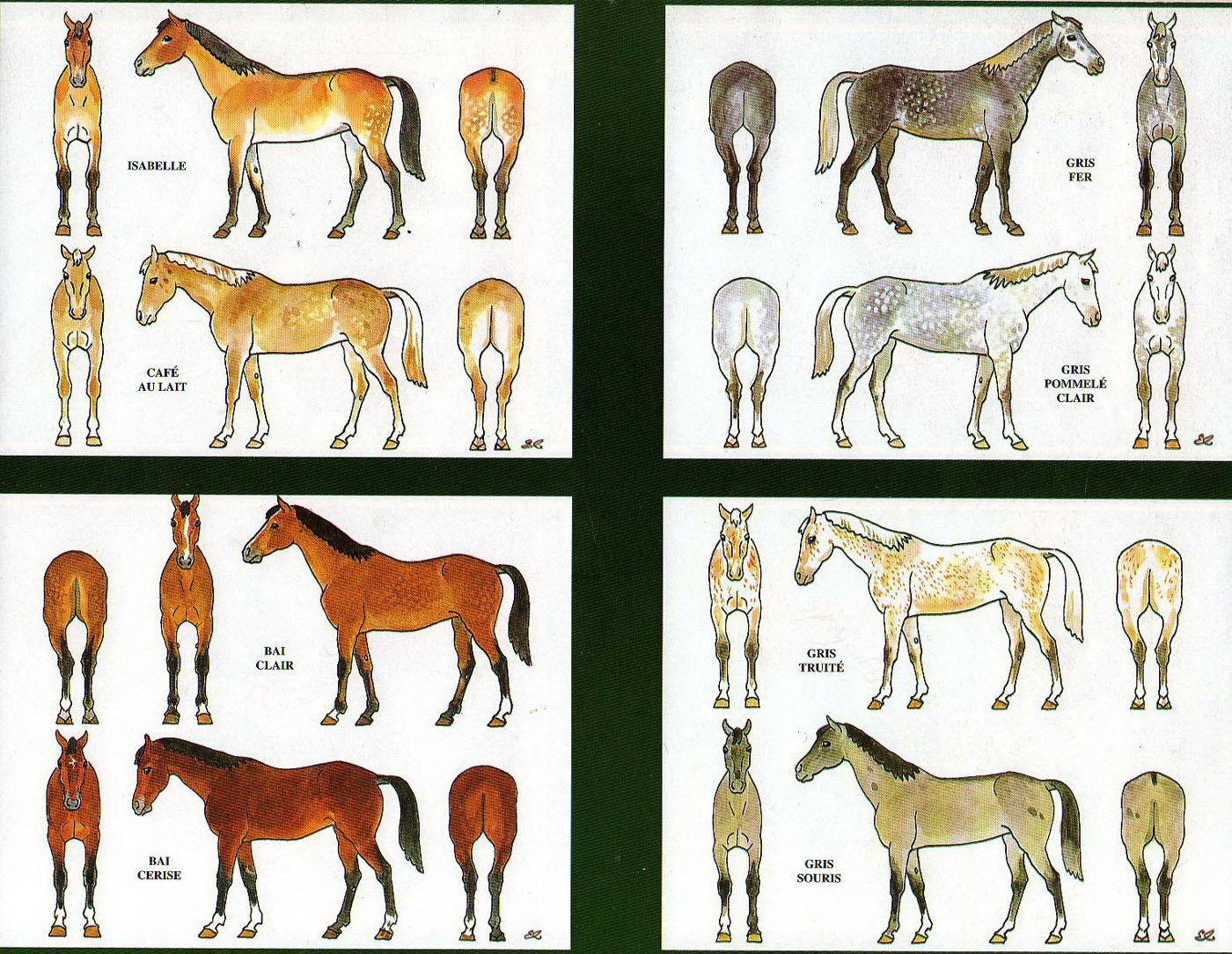 Les robes des chevaux par Eugène lelièpvre  ChevauxColor001_J